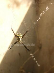 Spider in Gutter