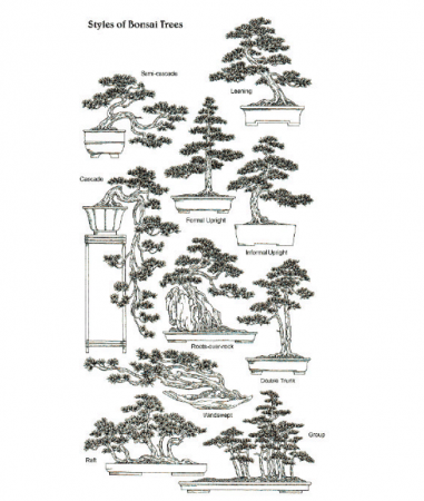 Styles-of-Bonsai