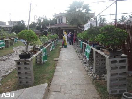 Annual Bonsai Exhibition 2013