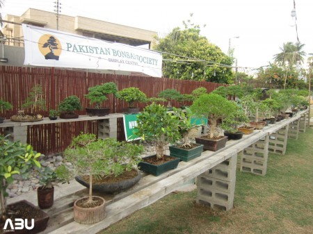 Annual Bonsai Exhibition 2013